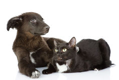 Cat and dog lie together. Stock Photography
