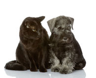 Cat and dog looking away. Royalty Free Stock Images
