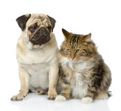 Cat and dog looking away. Royalty Free Stock Photos