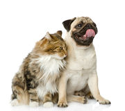 Cat and dog looking away. Stock Image