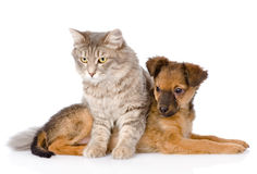 Cat and dog looking away. isolated on white background Royalty Free Stock Photos