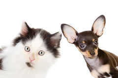 Cat and dog looking and camera Stock Photos
