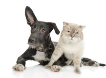 Cat and dog looking at camera. Isolated on white background stock image