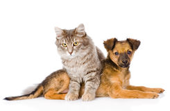 Cat and dog looking at camera. isolated on white background Stock Images