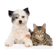 Cat with dog looking at camera together. isolated on white Stock Photos