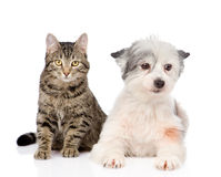 Cat with dog looking at camera together.  Royalty Free Stock Photography