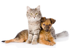 Cat and dog looking at camera. on white background.  royalty free stock photo