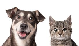 Cat and dog together isolated on white. Cat and dog looking in the camera on a white background Royalty Free Stock Images