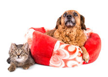 Cat and dog looking up on white background Stock Images