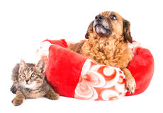Cat and dog looking up on white background Stock Photo