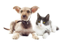 Cat and dog looking Stock Image