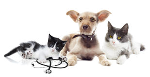 Cat and dog looking Stock Photography
