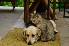 Cat and dog lounge together as a best friends. Cat and dog to lounge together as a best friends sadness in eyes Royalty Free Stock Photo