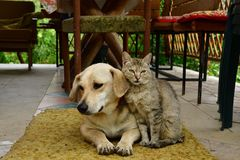 Cat and dog lounge together as a best friends. Cat and dog to lounge together as a best friends sadness in eyes Stock Photo