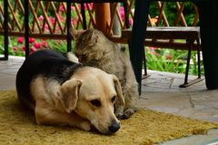 Cat and dog lounge together as a best friends. Cat and dog to lounge together as a best friends sadness in eyes Stock Photography