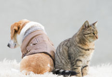 Cat and dog love. Cat and dog sitting back to back royalty free stock images