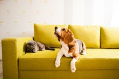Pets take a rest. The cat and the dog are lying on the sofa Royalty Free Stock Image