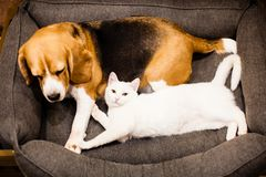 Good relationships between cat and dog royalty free stock images