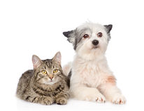 Cat and dog lying together and looking at camera . isolated Royalty Free Stock Photos
