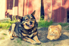 Cat and dog lying together Stock Image