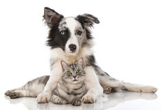 Cat and dog. Lying on a white background Royalty Free Stock Photo