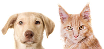 Cat and dog Royalty Free Stock Images