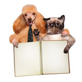 Cat and dog. Dog with a cat and a notebook isolated on white Royalty Free Stock Photography
