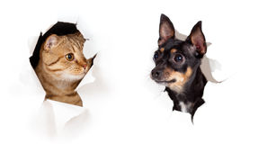 Cat and dog in paper side torn hole isolated Stock Photos