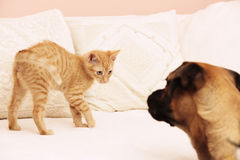 Cat and dog pets playing Stock Images