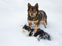 Cat and dog playing royalty free stock images