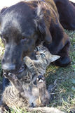 Cat and dog playing Stock Photography