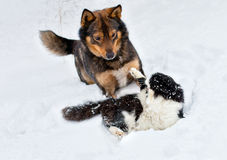 Cat and dog. Playing in the snow Stock Images