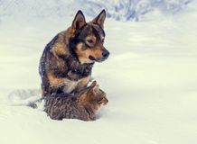 Cat and dog playing together on the snow in winter Royalty Free Stock Photos