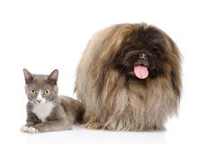 Cat and Dog posing. isolated on white background Royalty Free Stock Image