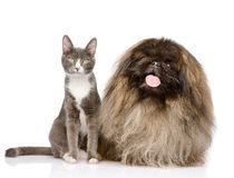 Cat and Dog posing. isolated on white background Royalty Free Stock Photos