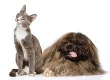 Cat and Dog posing.  on white background Royalty Free Stock Photo