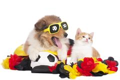 Cat and dog at public viewing Stock Photo