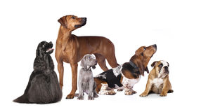Cat and dog. Puppy and kitten , cat and dog Stock Images