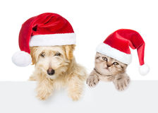 Cat and dog with red christmas hats peeking from behind empty board. isolated on white Stock Photo