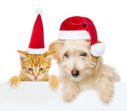 Cat and dog with red christmas hats peeking from behind empty board and looking at camera. isolated on white background Royalty Free Stock Photo