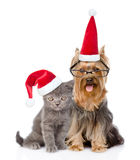 Cat and dog in red christmas hats sitting together. isolated on Royalty Free Stock Photo