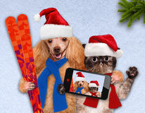 Cat and dog in red Christmas hats taking a selfie together with a smartphone. Dog with a cat in red Christmas hats lie on the snow. Cat and dog taking a selfie Royalty Free Stock Photography