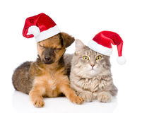 Cat and dog in red christmas hats.  on white background Stock Image