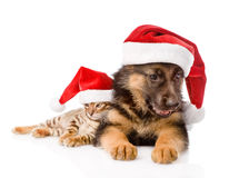 Cat and dog with red hat. focus on cat.   on white Royalty Free Stock Photography