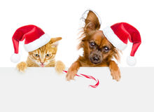 Cat and dog in red santa hats with Christmas candy cane looking. Out because of the poster. isolated on white background Royalty Free Stock Images