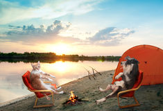 Cat and dog relaxing Stock Image