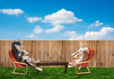Cat and dog relaxing Royalty Free Stock Photo