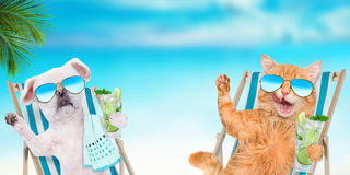 Cat and dog relaxing sitting on deckchair with cocktail . Stock Photos