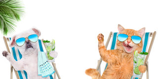 Cat and dog relaxing sitting on deckchair with cocktail . Stock Photography