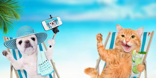 Cat and dog relaxing sitting on deckchair . Stock Photos